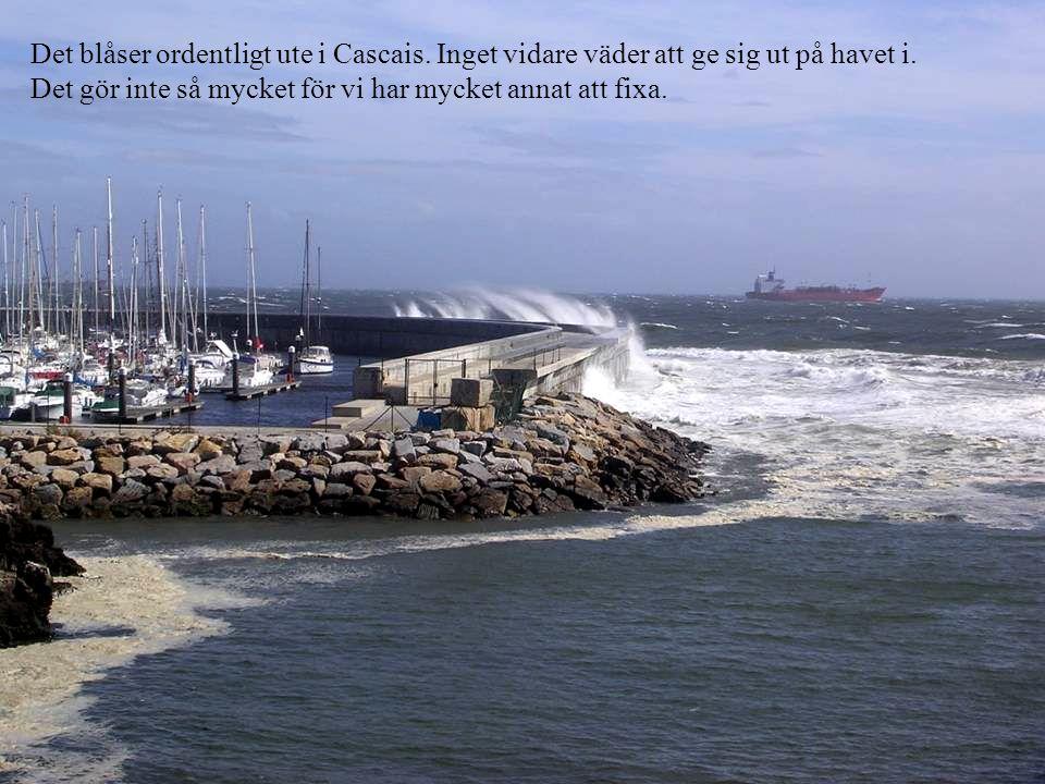 Det blåser ordentligt ute i Cascais. Inget vidare väder att ge sig ut på havet i.
