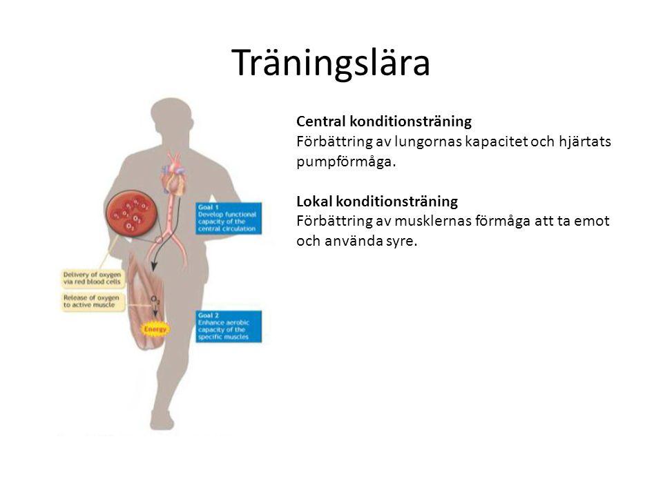Träningslära Central konditionsträning Förbättring av lungornas kapacitet och hjärtats pumpförmåga.