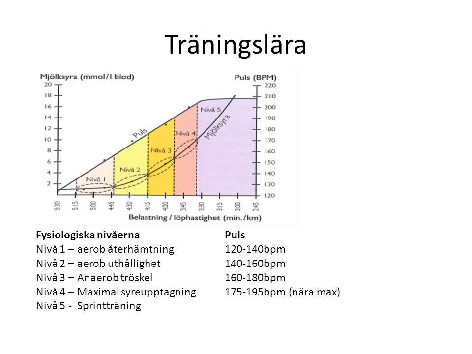 Träningslära Fysiologiska nivåernaPuls Nivå 1 – aerob återhämtning120-140bpm Nivå 2 – aerob uthållighet140-160bpm Nivå 3 – Anaerob tröskel160-180bpm Nivå 4 – Maximal syreupptagning175-195bpm (nära max) Nivå 5 - Sprintträning