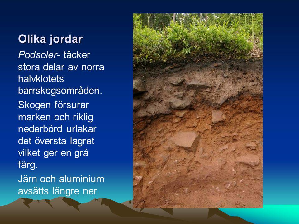 Olika jordar Podsoler- täcker stora delar av norra halvklotets barrskogsområden.