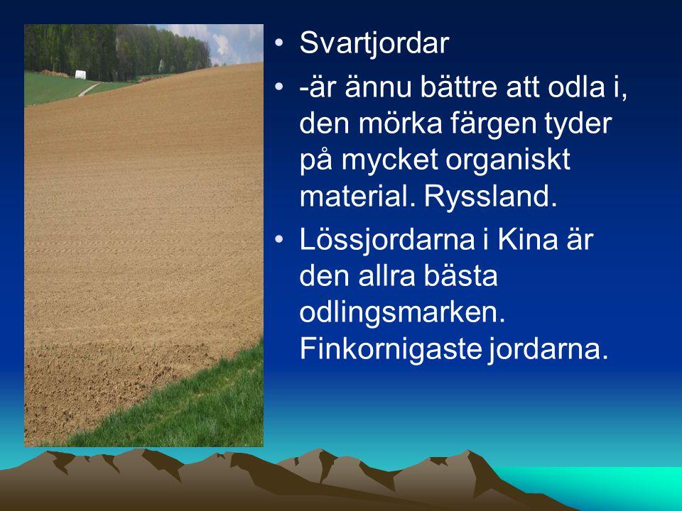 Svartjordar -är ännu bättre att odla i, den mörka färgen tyder på mycket organiskt material.