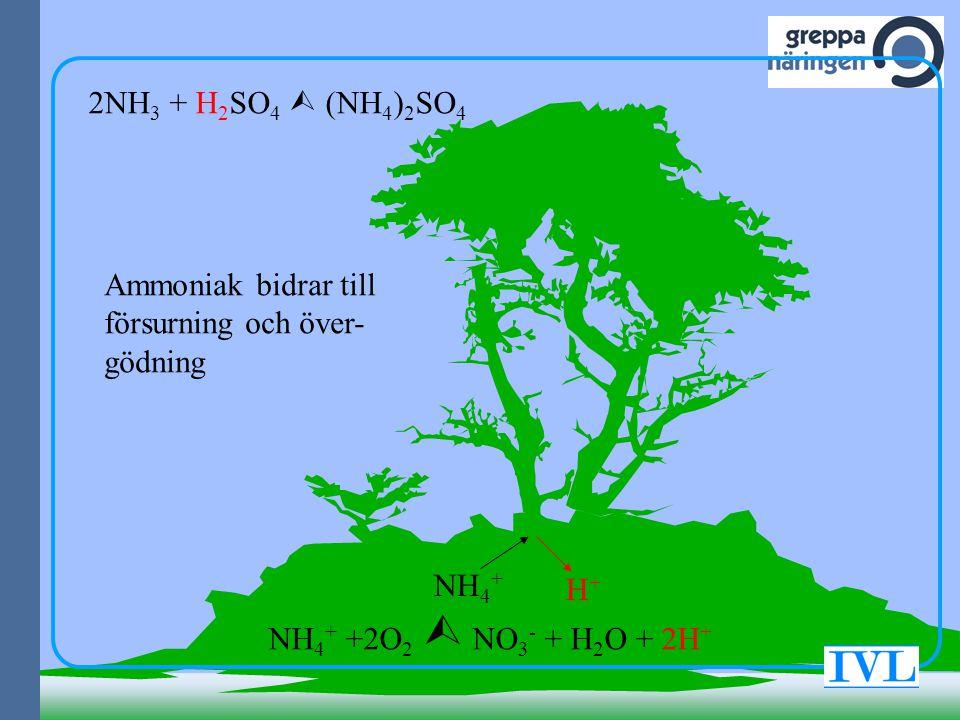 NH 4 + H+H+ NH 4 + +2O 2  NO 3 - + H 2 O + 2H + 2NH 3 + H 2 SO 4  (NH 4 ) 2 SO 4 Ammoniak bidrar till försurning och över- gödning