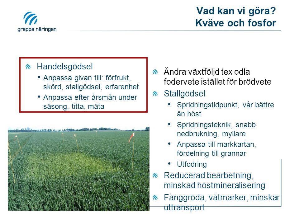 Vad kan vi göra? Kväve och fosfor Handelsgödsel Anpassa givan till: förfrukt, skörd, stallgödsel, erfarenhet Anpassa efter årsmån under säsong, titta,