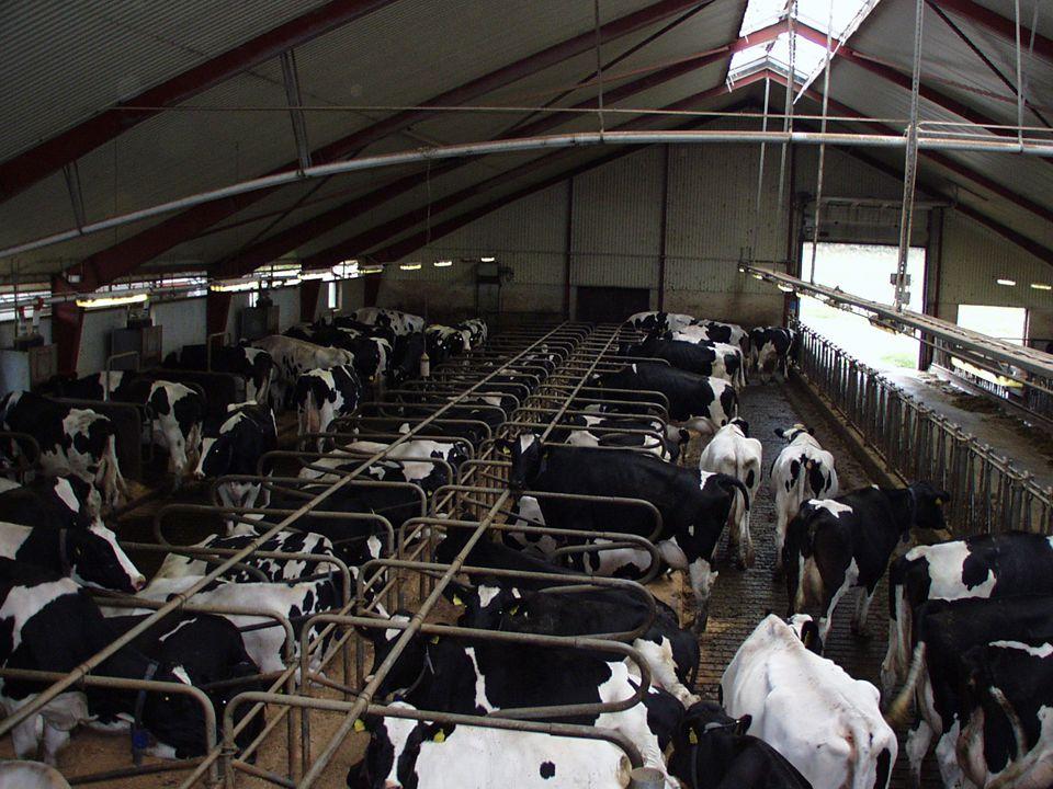 Bild Mjölkproduktionen text : 9 800 kg ECM 9 000 kg levererat ?