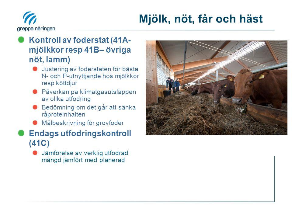 Mjölk, nöt, får och häst Kontroll av foderstat (41A- mjölkkor resp 41B– övriga nöt, lamm) Justering av foderstaten för bästa N- och P-utnyttjande hos mjölkkor resp köttdjur Påverkan på klimatgasutsläppen av olika utfodring Bedömning om det går att sänka råproteinhalten Målbeskrivning för grovfoder Endags utfodringskontroll (41C) Jämförelse av verklig utfodrad mängd jämfört med planerad