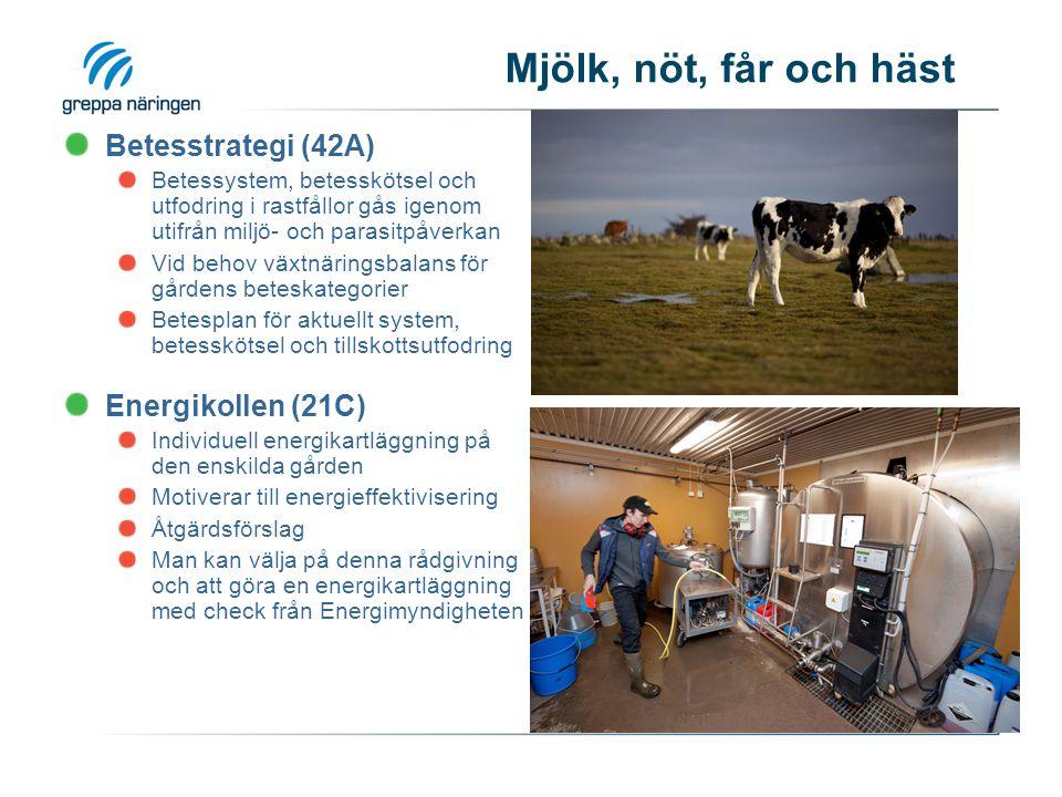 Mjölk, nöt, får och häst Betesstrategi (42A) Betessystem, betesskötsel och utfodring i rastfållor gås igenom utifrån miljö- och parasitpåverkan Vid behov växtnäringsbalans för gårdens beteskategorier Betesplan för aktuellt system, betesskötsel och tillskottsutfodring Energikollen (21C) Individuell energikartläggning på den enskilda gården Motiverar till energieffektivisering Åtgärdsförslag Man kan välja på denna rådgivning och att göra en energikartläggning med check från Energimyndigheten
