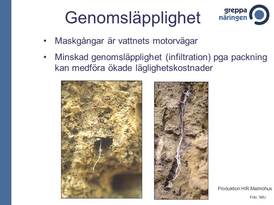 Genomsläpplighet Maskgångar är vattnets motorvägar Minskad genomsläpplighet (infiltration) pga packning kan medföra ökade läglighetskostnader Foto: SB