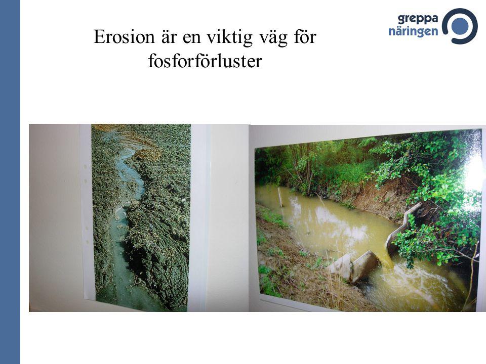 Erosion är en viktig väg för fosforförluster