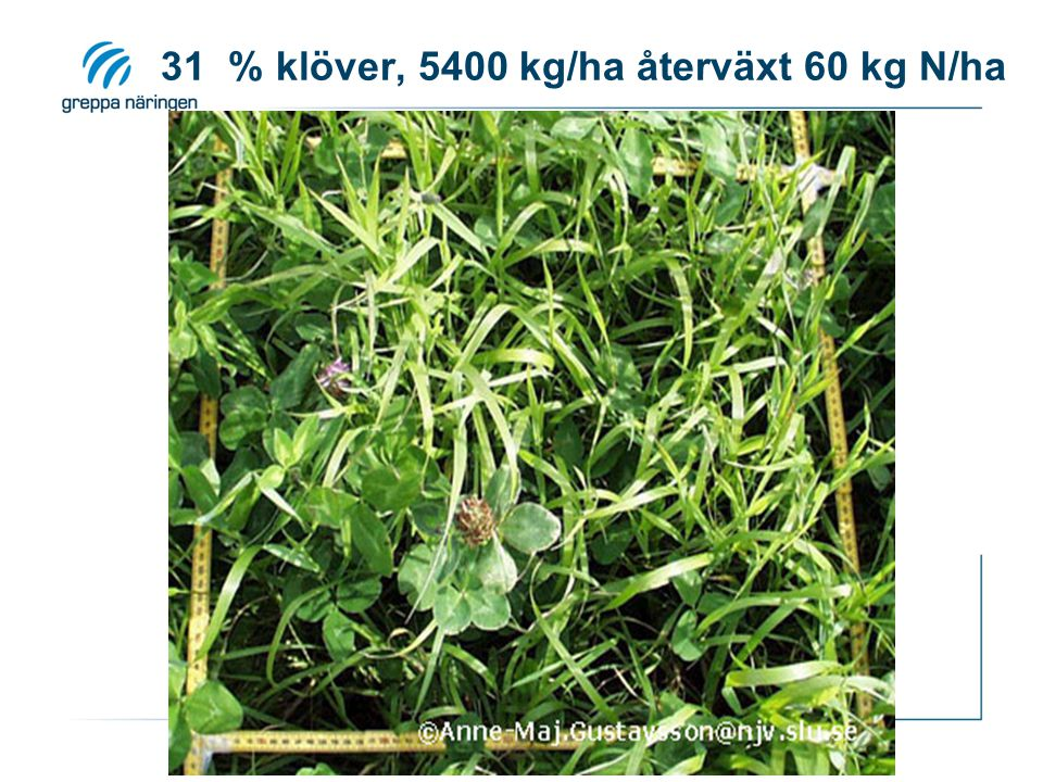 31 % klöver, 5400 kg/ha återväxt 60 kg N/ha