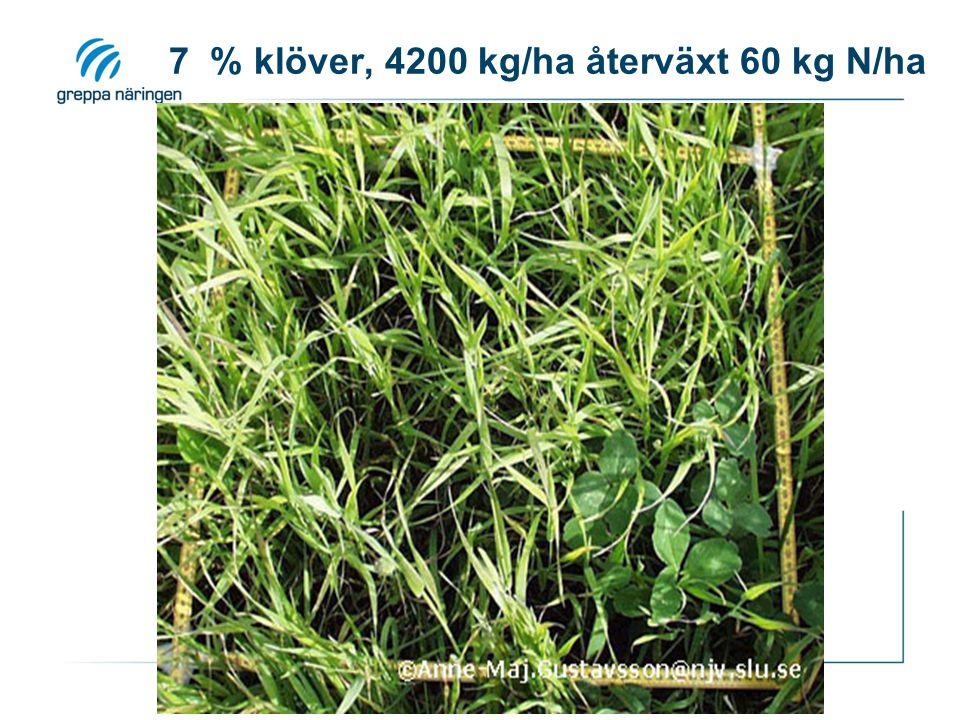 7 % klöver, 4200 kg/ha återväxt 60 kg N/ha