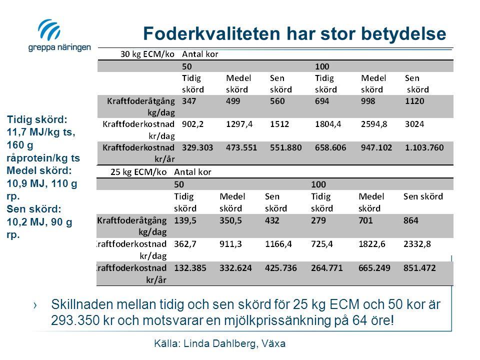 Foderkvaliteten har stor betydelse ›Skillnaden mellan tidig och sen skörd för 25 kg ECM och 50 kor är 293.350 kr och motsvarar en mjölkprissänkning på
