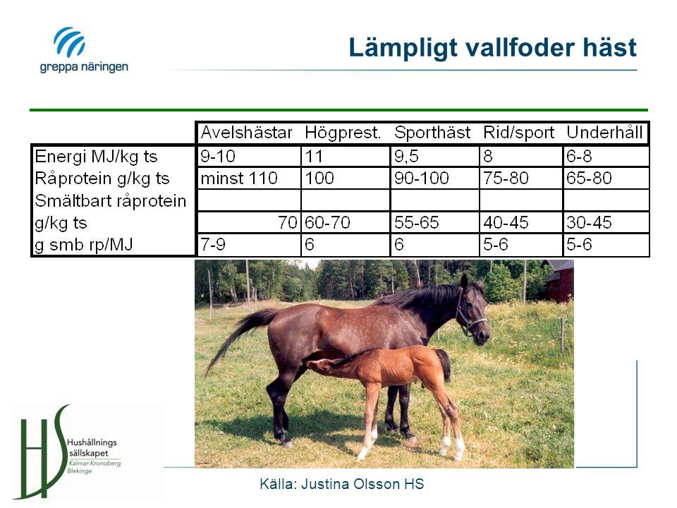 Lämpligt vallfoder häst Källa: Justina Olsson HS