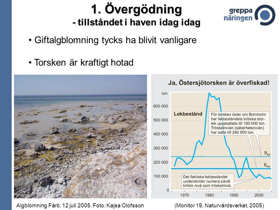 Giftalgblomning tycks ha blivit vanligare Torsken är kraftigt hotad 1.Övergödning - tillståndet i haven idag idag (Monitor 19, Naturvårdsverket, 2005)