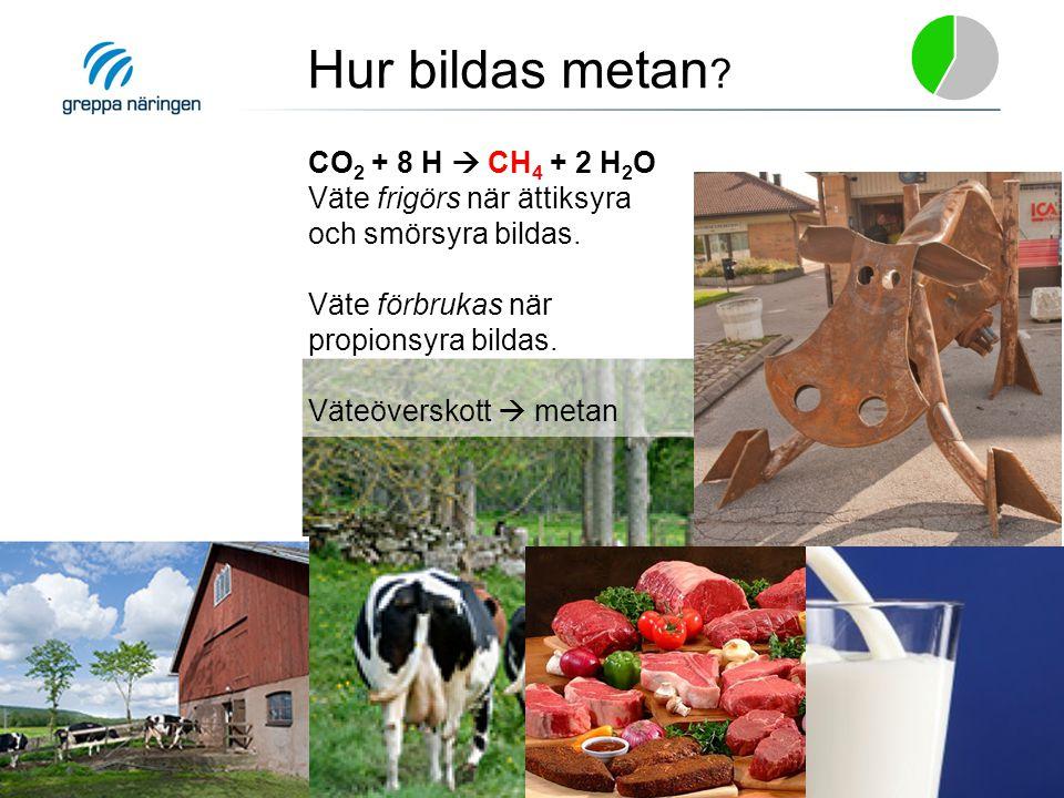 CO 2 + 8 H  CH 4 + 2 H 2 O Väte frigörs när ättiksyra och smörsyra bildas. Väte förbrukas när propionsyra bildas. Väteöverskott  metan Hur bildas me