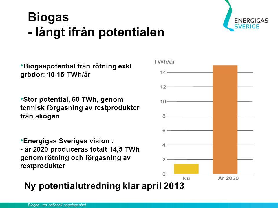 Biogas - långt ifrån potentialen Biogaspotential från rötning exkl. grödor: 10-15 TWh/år Stor potential, 60 TWh, genom termisk förgasning av restprodu