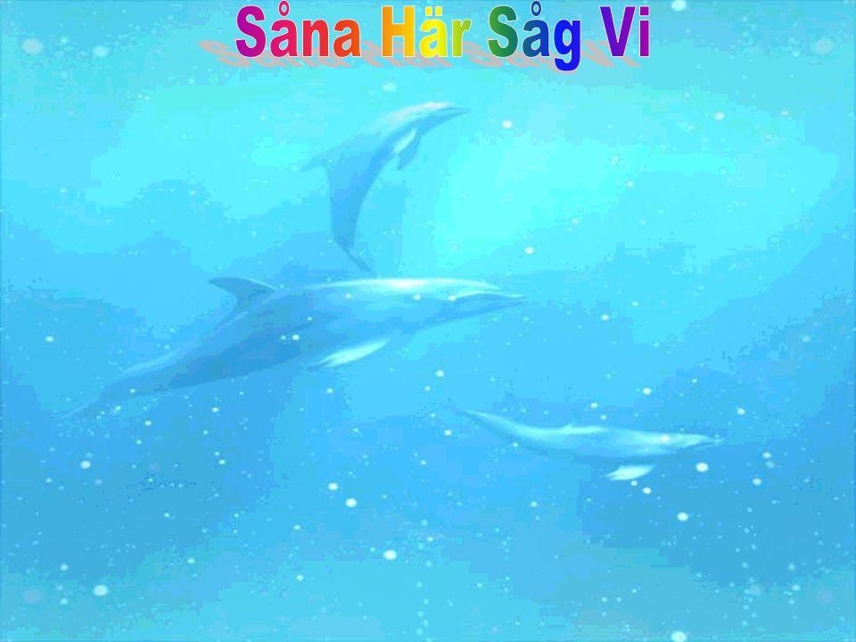 Kaskelotten….Den simmar i 6 km i timman. Hanen väger 36000 kg och honan väger 20000 kg.
