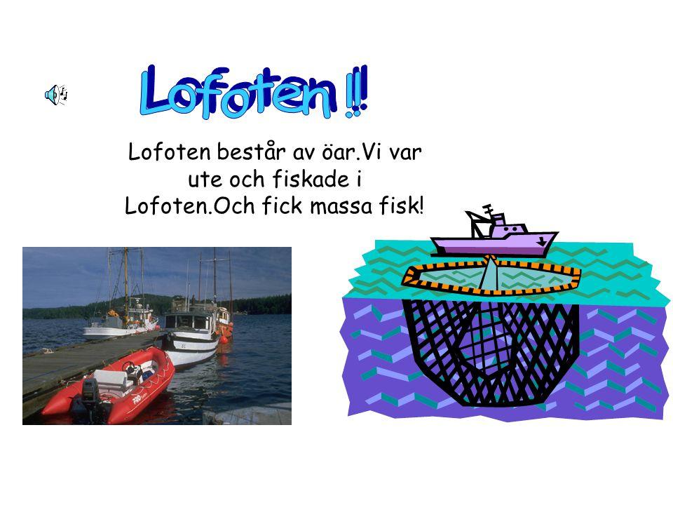 Lofoten består av öar.Vi var ute och fiskade i Lofoten.Och fick massa fisk!