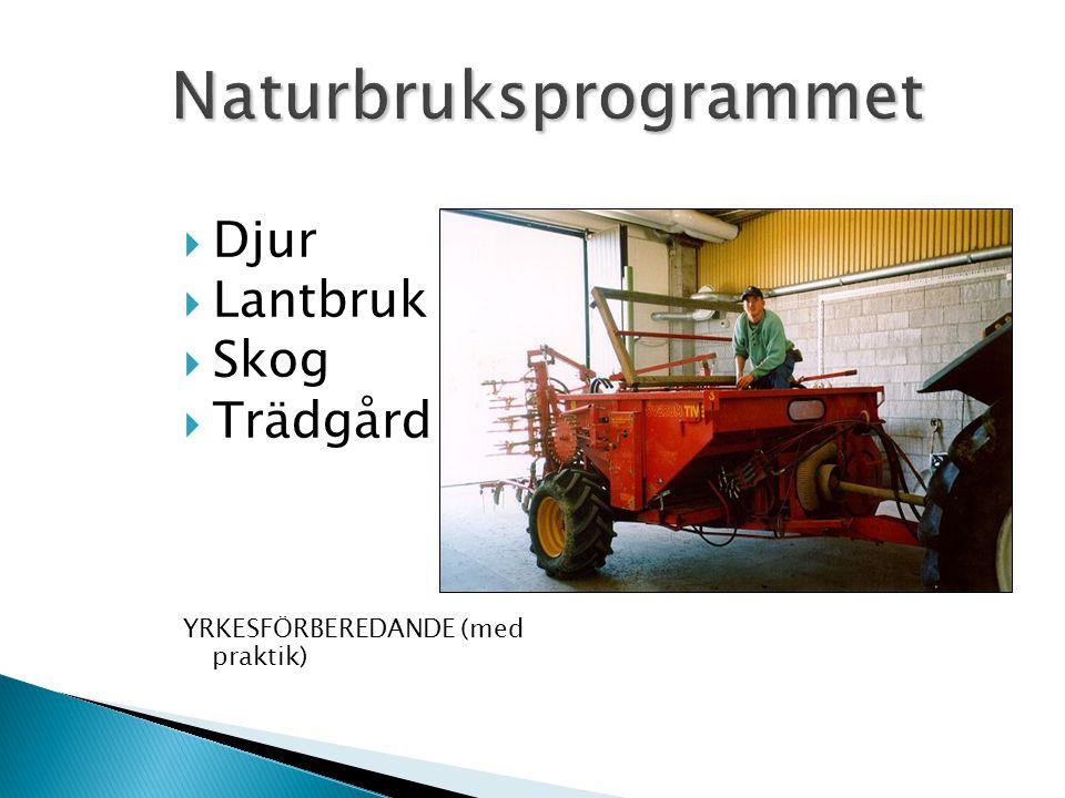  Djur  Lantbruk  Skog  Trädgård YRKESFÖRBEREDANDE (med praktik)