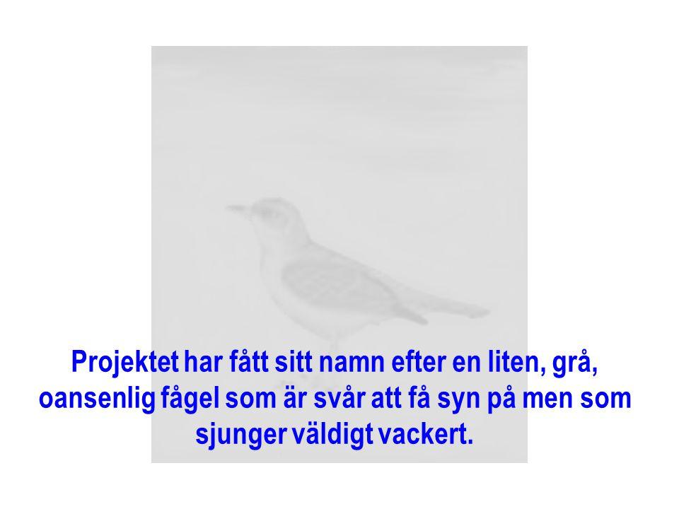 Projektet har fått sitt namn efter en liten, grå, oansenlig fågel som är svår att få syn på men som sjunger väldigt vackert.