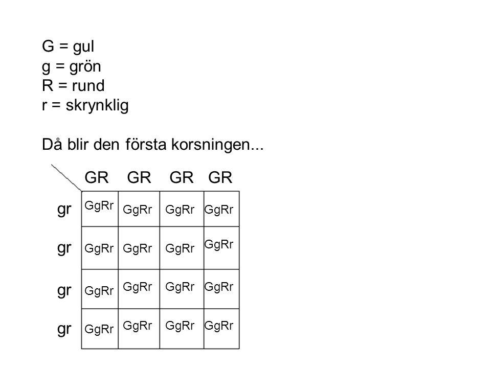G = gul g = grön R = rund r = skrynklig Då blir den första korsningen... GR gr GgRr