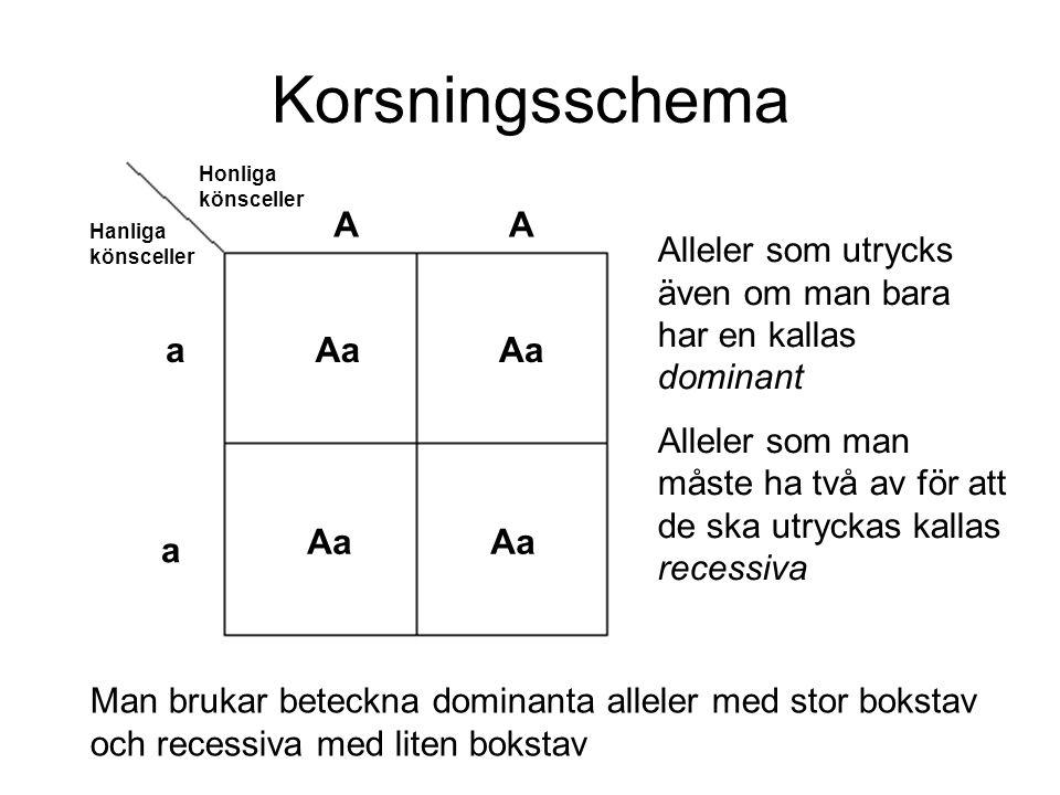 Korsningsschema Honliga könsceller Hanliga könsceller AA a a Aa Man brukar beteckna dominanta alleler med stor bokstav och recessiva med liten bokstav