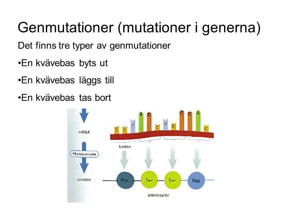 Genmutationer (mutationer i generna) Det finns tre typer av genmutationer En kvävebas byts ut En kvävebas läggs till En kvävebas tas bort