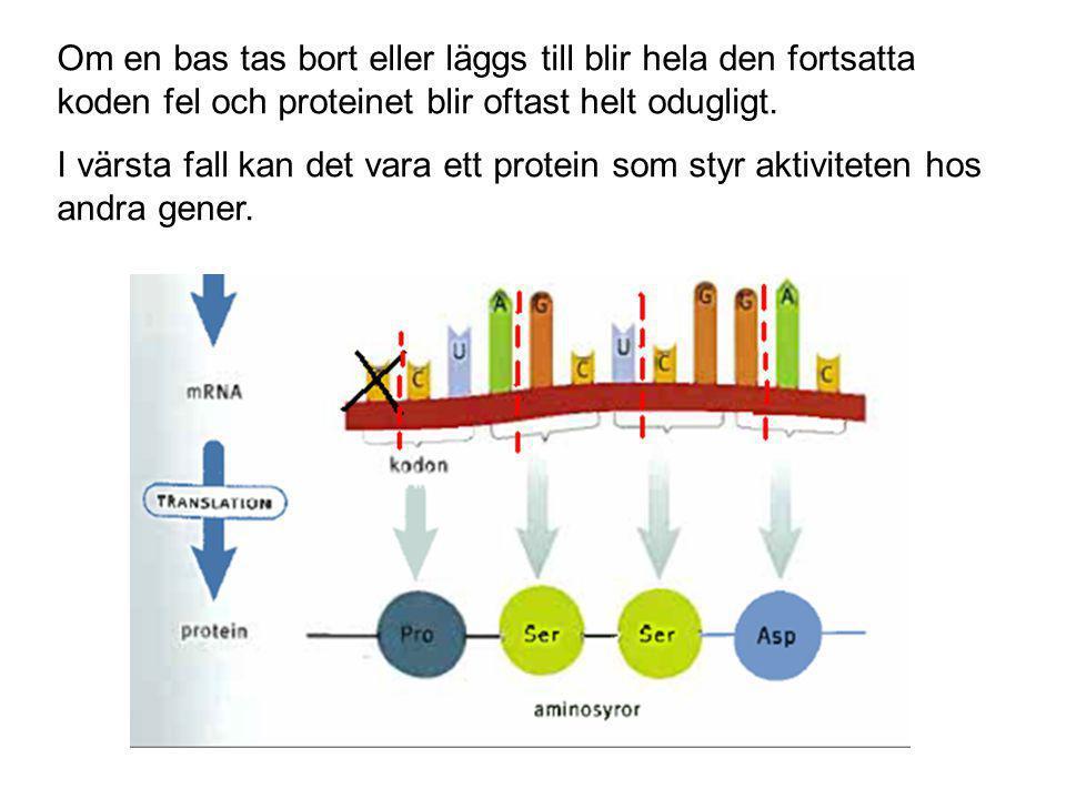 Om en bas tas bort eller läggs till blir hela den fortsatta koden fel och proteinet blir oftast helt odugligt. I värsta fall kan det vara ett protein