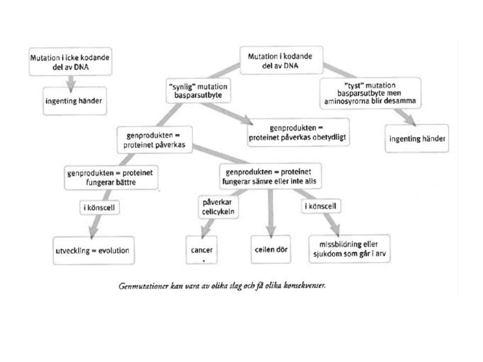 Varför sker genmutationer.Vid replikationen skall miljarder kvävebaser kopieras.