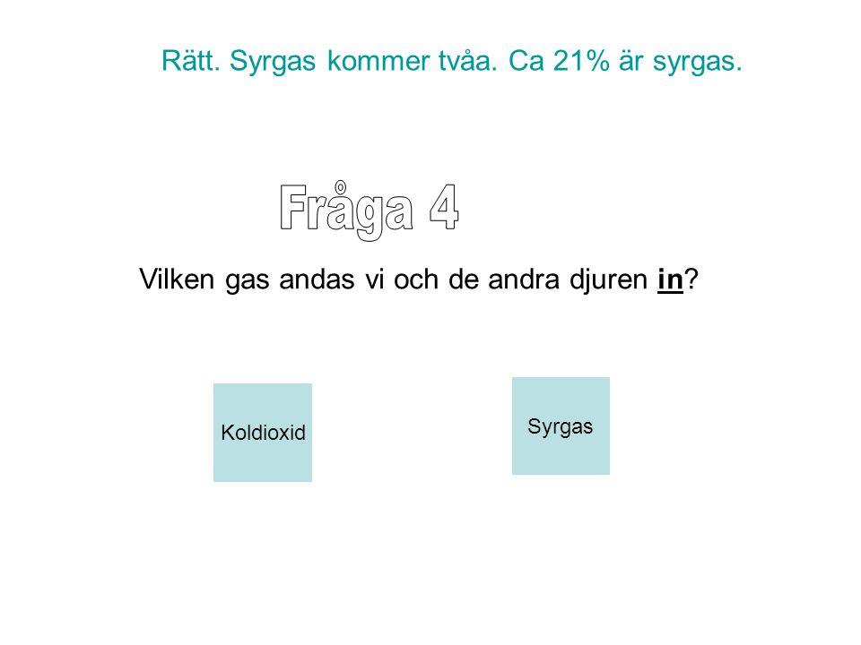 Rätt. Syrgas kommer tvåa. Ca 21% är syrgas. Koldioxid Syrgas Vilken gas andas vi och de andra djuren in?