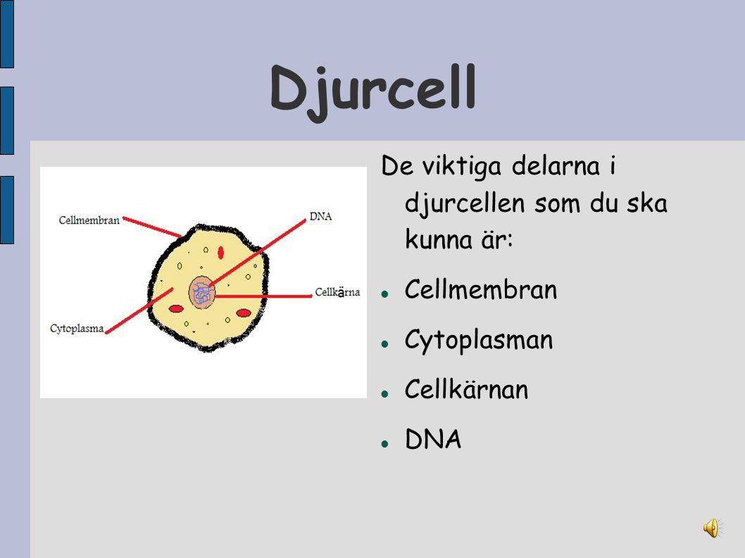 Djurcell De viktiga delarna i djurcellen som du ska kunna är: Cellmembran Cytoplasman Cellkärnan DNA
