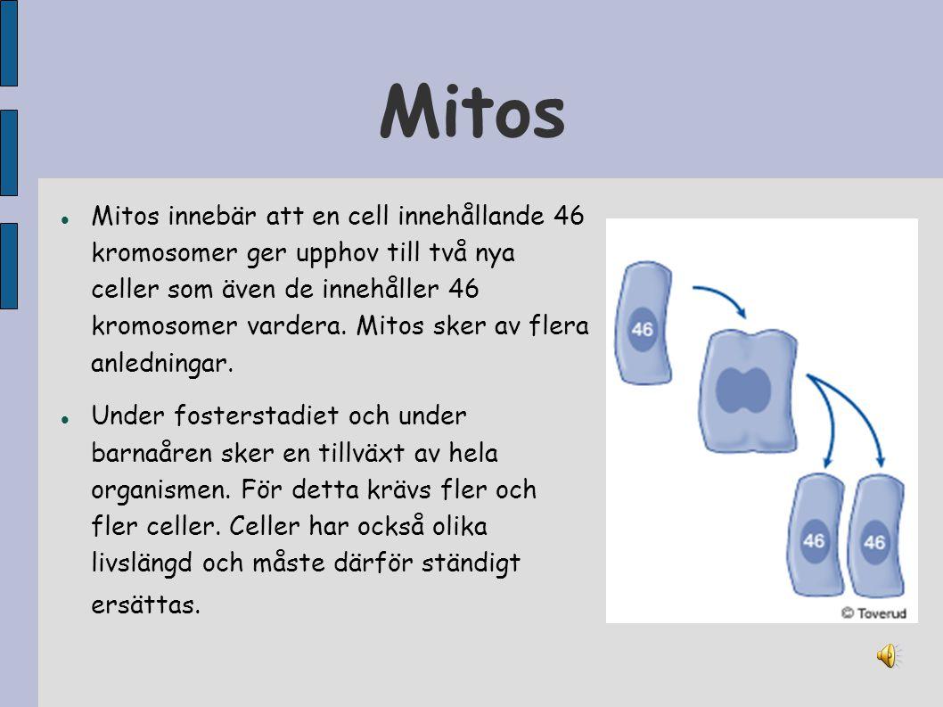 Mitos Mitos innebär att en cell innehållande 46 kromosomer ger upphov till två nya celler som även de innehåller 46 kromosomer vardera. Mitos sker av