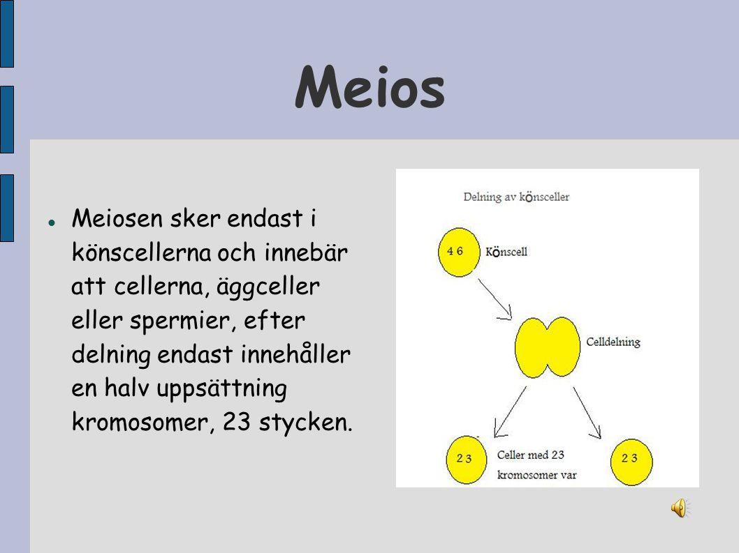 Meios Meiosen sker endast i könscellerna och innebär att cellerna, äggceller eller spermier, efter delning endast innehåller en halv uppsättning kromo