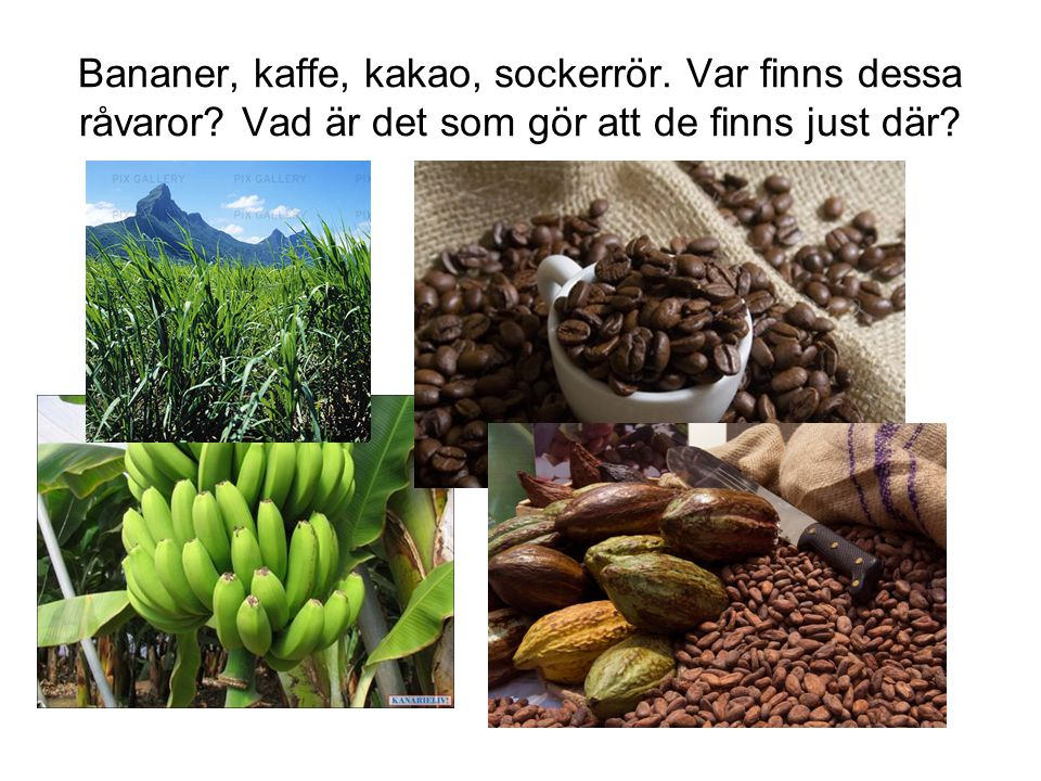 Bananer, kaffe, kakao, sockerrör. Var finns dessa råvaror? Vad är det som gör att de finns just där?