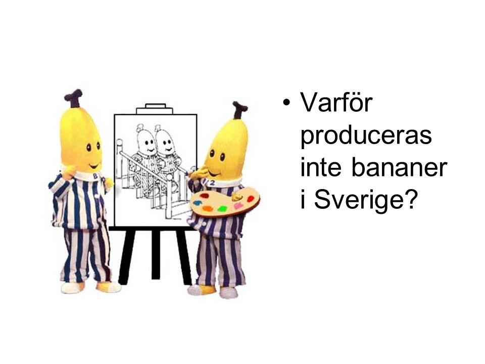 Varför produceras inte bananer i Sverige?