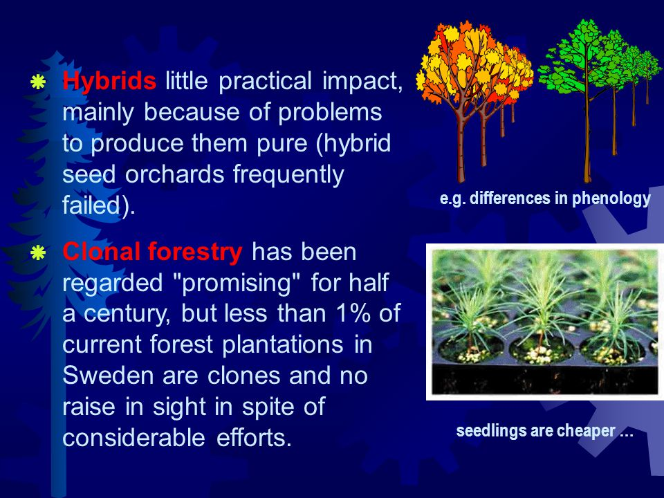  Hybrids little practical impact, mainly because of problems to produce them pure (hybrid seed orchards frequently failed).  Clonal forestry has bee