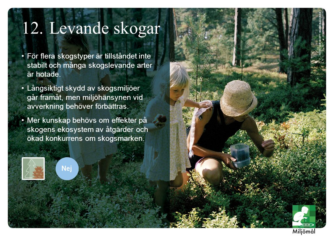 För flera skogstyper är tillståndet inte stabilt och många skogslevande arter är hotade. Långsiktigt skydd av skogsmiljöer går framåt, men miljöhänsyn