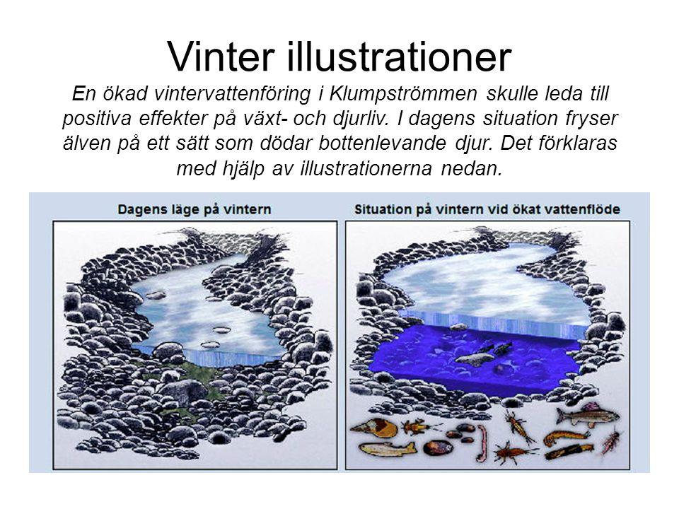 Vinter illustrationer En ökad vintervattenföring i Klumpströmmen skulle leda till positiva effekter på växt- och djurliv. I dagens situation fryser äl