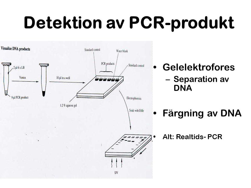 Detektion av PCR-produkt Gelelektrofores –Separation av DNA Färgning av DNA Alt: Realtids- PCR