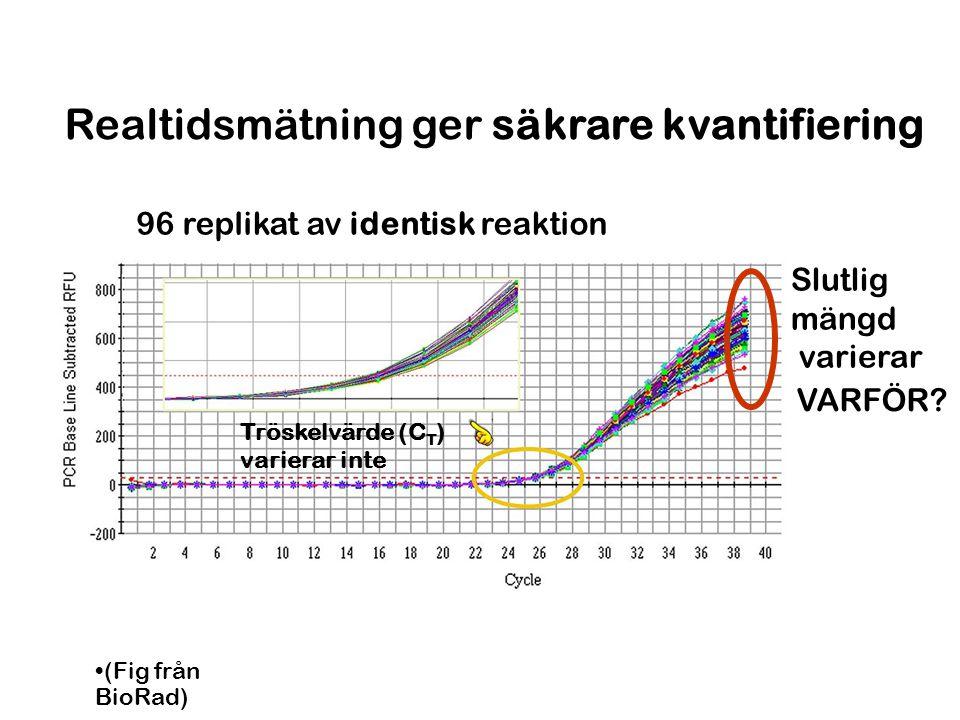 Realtidsmätning ger säkrare kvantifiering 96 replikat av identisk reaktion Slutlig mängd varierar Tröskelvärde (C T ) varierar inte (Fig från BioRad)