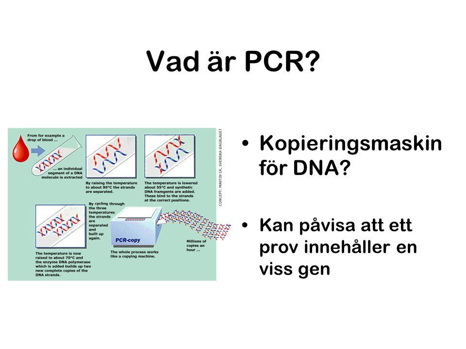 Vad är PCR? Kopieringsmaskin för DNA? Kan påvisa att ett prov innehåller en viss gen
