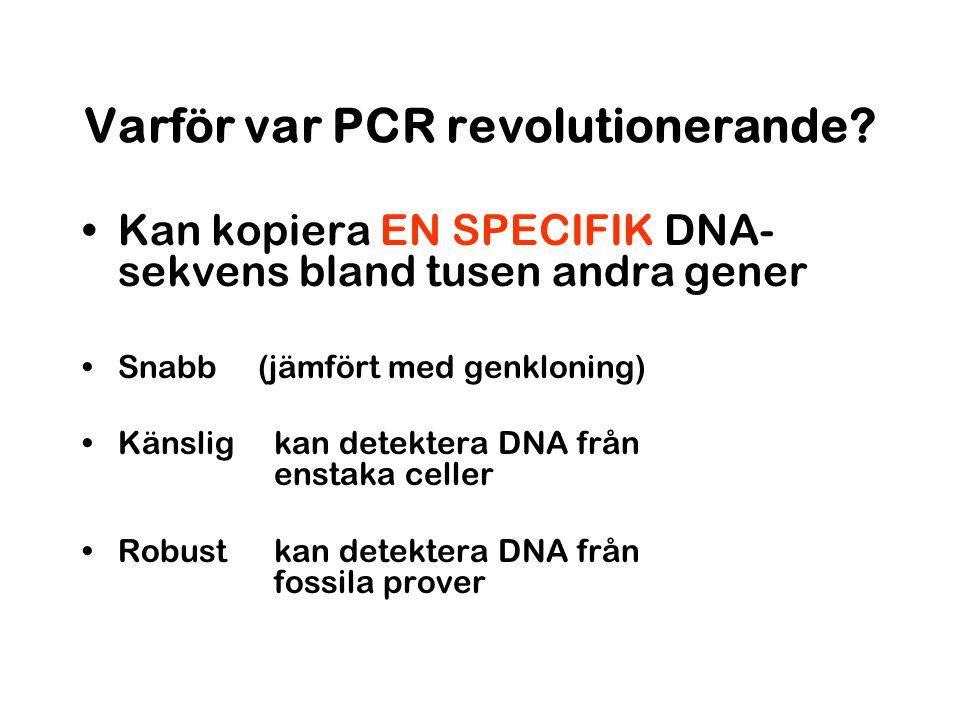 Varför var PCR revolutionerande? Kan kopiera EN SPECIFIK DNA- sekvens bland tusen andra gener Snabb (jämfört med genkloning) Känslig kan detektera DNA