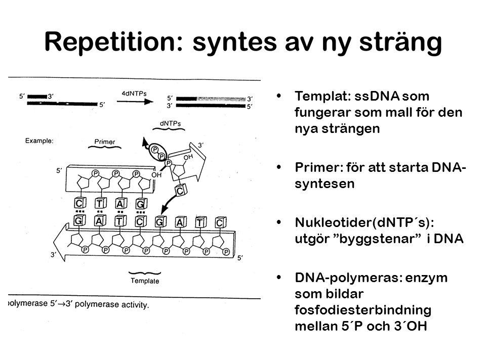 Repetition: syntes av ny sträng Templat: ssDNA som fungerar som mall för den nya strängen Primer: för att starta DNA- syntesen Nukleotider(dNTP´s): ut