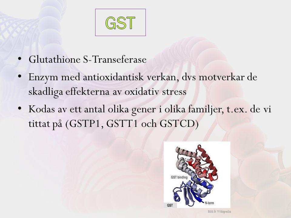 Glutathione S-Transeferase Enzym med antioxidantisk verkan, dvs motverkar de skadliga effekterna av oxidativ stress Kodas av ett antal olika gener i olika familjer, t.ex.