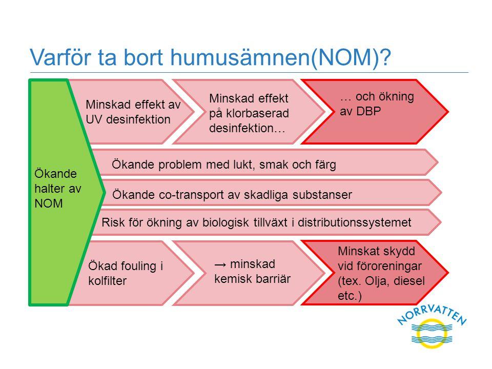 Varför ta bort humusämnen(NOM)? Ökande problem med lukt, smak och färg Ökande co-transport av skadliga substanser Risk för ökning av biologisk tillväx