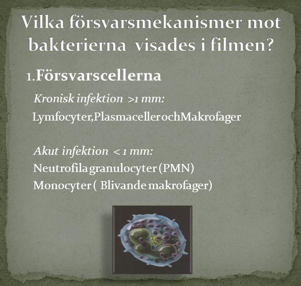 1.Försvarscellerna Kronisk infektion >1 mm: Lymfocyter,Plasmaceller ochMakrofager Akut infektion < 1 mm: Neutrofila granulocyter (PMN) Monocyter ( Bli