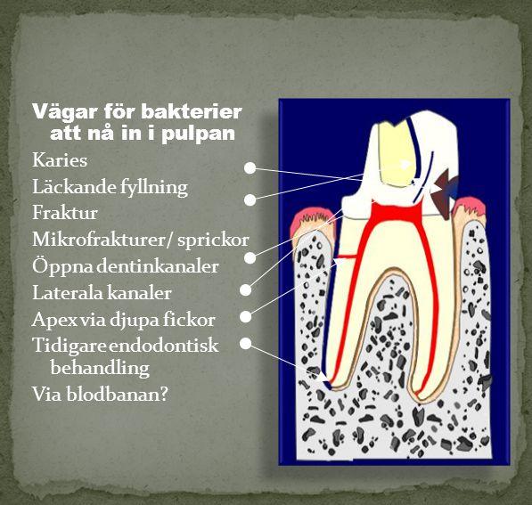 Vägar för bakterier att nå in i pulpan Karies Läckande fyllning Fraktur Mikrofrakturer/ sprickor Öppna dentinkanaler Laterala kanaler Apex via djupa f