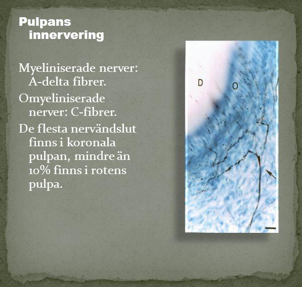 Pulpans innervering Myeliniserade nerver: A-delta fibrer. Omyeliniserade nerver: C-fibrer. De flesta nervändslut finns i koronala pulpan, mindre än 10