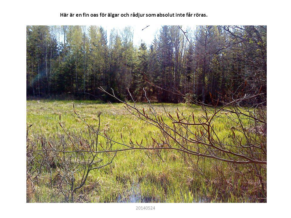 Här är en fin oas för älgar och rådjur som absolut inte får röras. 20140524