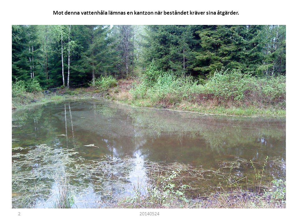 Detta vattendrag i lövbeståndet har en naturlig kantzon som lämnas orörd.
