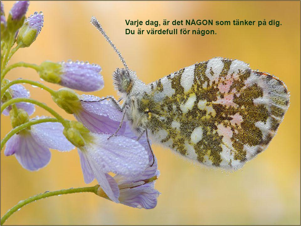 Känner du inte igen uttrycken - `stanna och dofta på blommorna Skicka detta till dina vänner!!